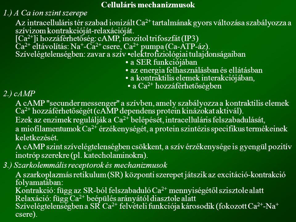 4.) A szívizom érzékenységének megváltozása Ca ++ -mal szemben Szívelégtelenségben megváltozik: a miofilamentumok érzékenysége Ca 2+ -ra, a Ca 2+ affinitása a troponin C-hez, a miozin könnyű lánc foszforilációja (nincs ATP képződés).