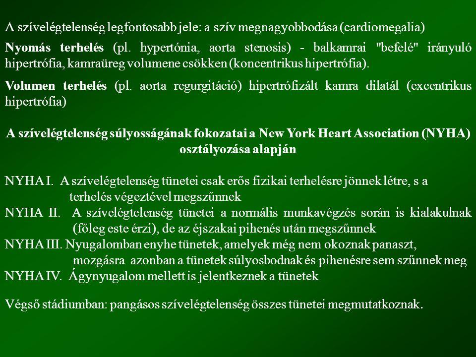 Extrinsic kompenzációs mechanizmusok: szimpatikus idegrendszer renin-angiotenzin-aldoszteron-rendszer A szimpatikus idegrendszer aktiválódása: tachycardia szívkontrakció fokozódása emelkedett értónus (főleg vénás tónus) emelkedett töltőnyomás a szív dilatál a szívizom feszülése fokozódik A renin-angiotenzin-aldoszteron rendszer aktiválódása: aldoszteron szekréció fokozódás Na + és viz retenció nő a keringő vér mennyisége ödémák Intrinsic kompenzációs mechanizmus: a szív hipertrófiája A szív izomzata (szívmassza) megnő (a PTF , a nyomás-és volumenterhelés ellensúlyozására).