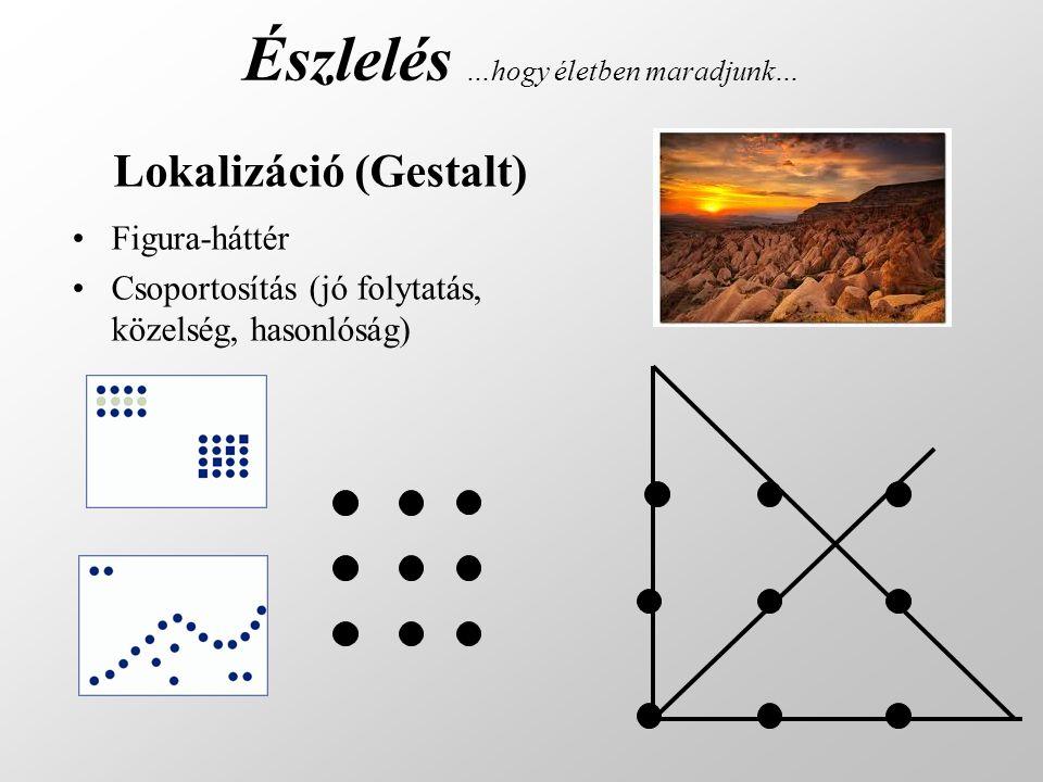 Észlelés …hogy életben maradjunk… Figura-háttér Csoportosítás (jó folytatás, közelség, hasonlóság) Lokalizáció (Gestalt)