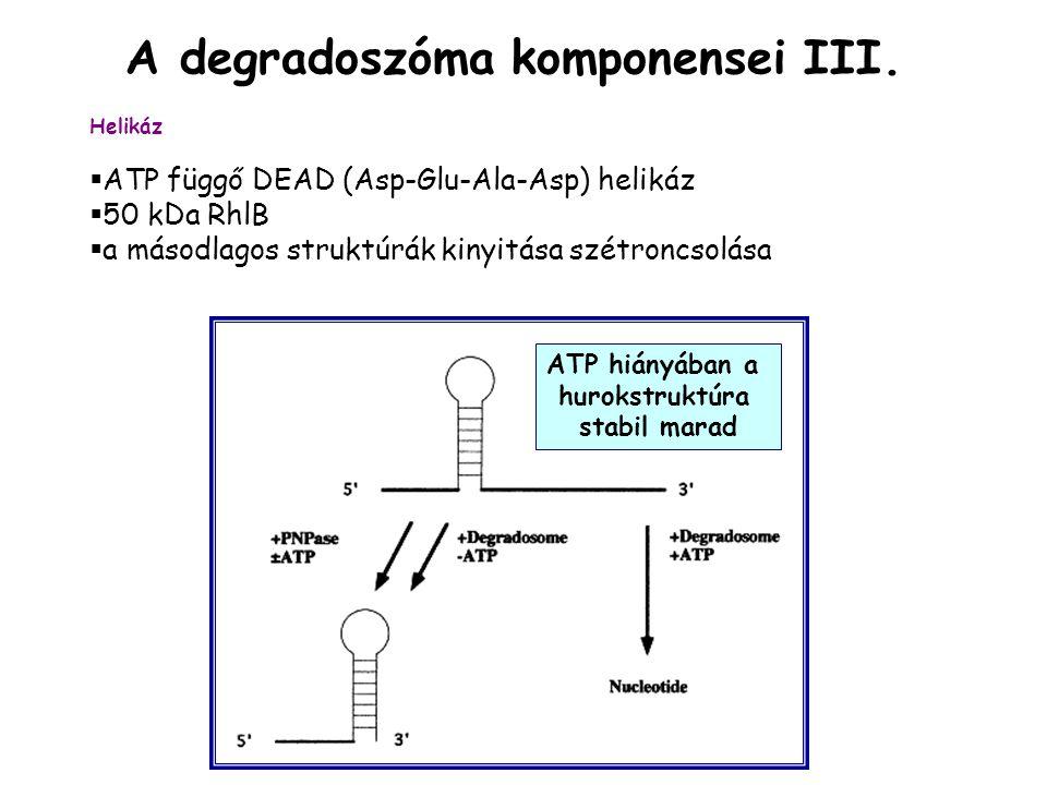 A degradoszóma komponensei III.