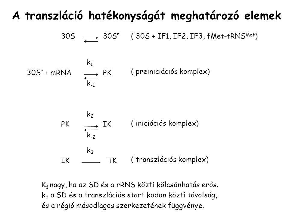 A transzláció hatékonyságát meghatározó elemek 30S30S * 30S * + mRNAPK k1k1 k -1 PK k2k2 k -2 IK TK k3k3 ( 30S + IF1, IF2, IF3, fMet-tRNS Met ) ( preiniciációs komplex) ( iniciációs komplex) ( transzlációs komplex) K 1 nagy, ha az SD és a rRNS közti kölcsönhatás erős.