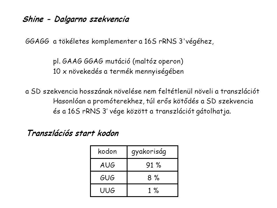 Shine - Dalgarno szekvencia GGAGG a tökéletes komplementer a 16S rRNS 3 végéhez, pl.