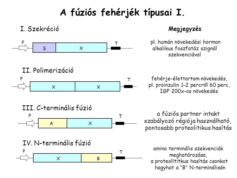 A fúziós fehérjék típusai I.I. Szekréció SX T P Megjegyzés pl.
