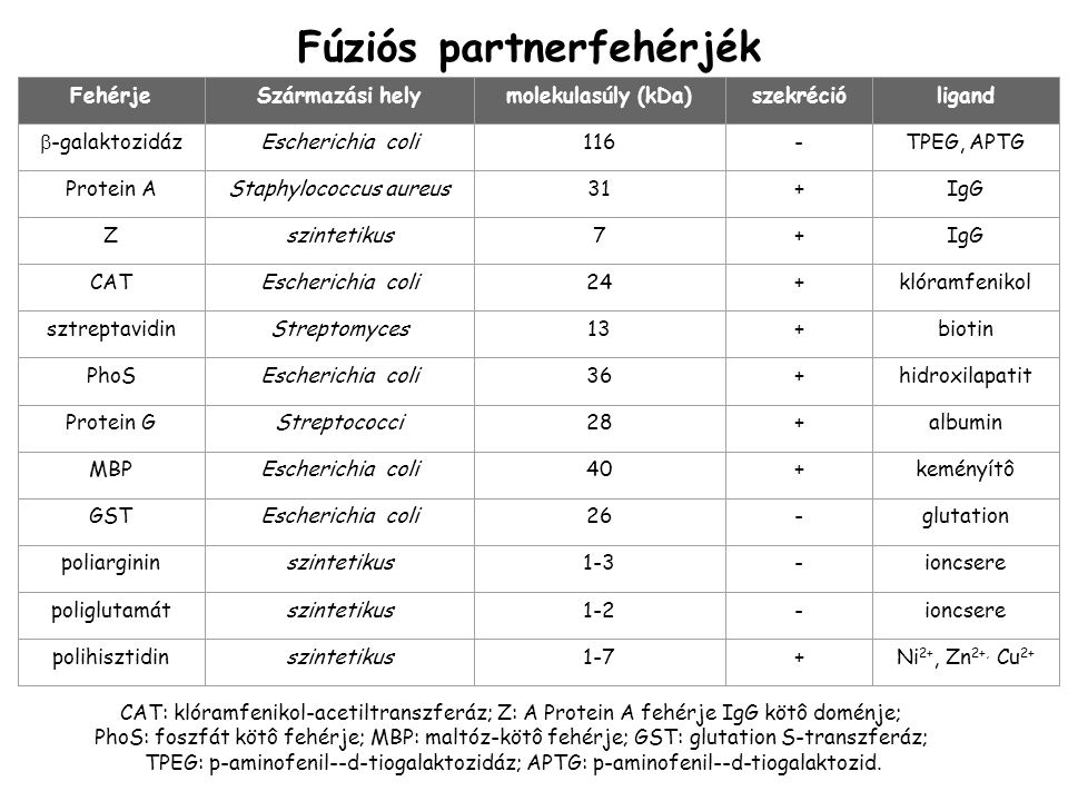 FehérjeSzármazási helymolekulasúly (kDa)szekrécióligand  -galaktozidázEscherichia coli116-TPEG, APTG Protein AStaphylococcus aureus31+IgG Zszintetikus7+IgG CATEscherichia coli24+klóramfenikol sztreptavidinStreptomyces13+biotin PhoSEscherichia coli36+hidroxilapatit Protein GStreptococci28+albumin MBPEscherichia coli40+keményítô GSTEscherichia coli26-glutation poliargininszintetikus1-3-ioncsere poliglutamátszintetikus1-2-ioncsere polihisztidinszintetikus1-7+Ni 2+, Zn 2+, Cu 2+ Fúziós partnerfehérjék CAT: klóramfenikol-acetiltranszferáz; Z: A Protein A fehérje IgG kötô doménje; PhoS: foszfát kötô fehérje; MBP: maltóz-kötô fehérje; GST: glutation S-transzferáz; TPEG: p-aminofenil--d-tiogalaktozidáz; APTG: p-aminofenil--d-tiogalaktozid.