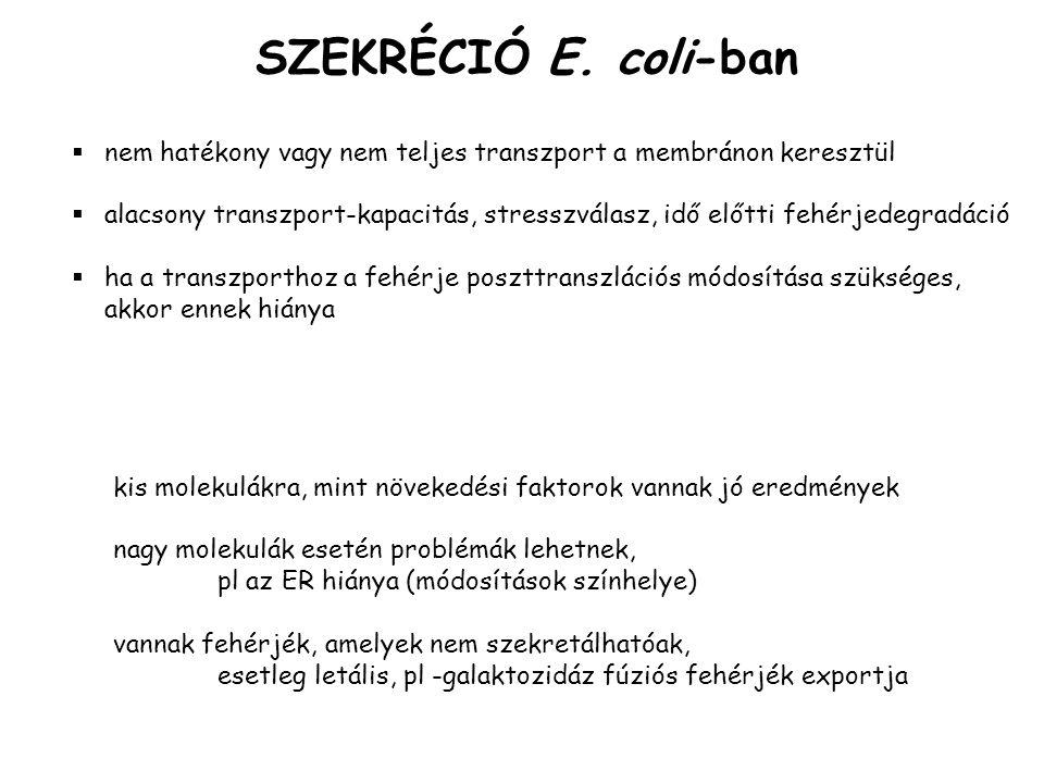SZEKRÉCIÓ E.