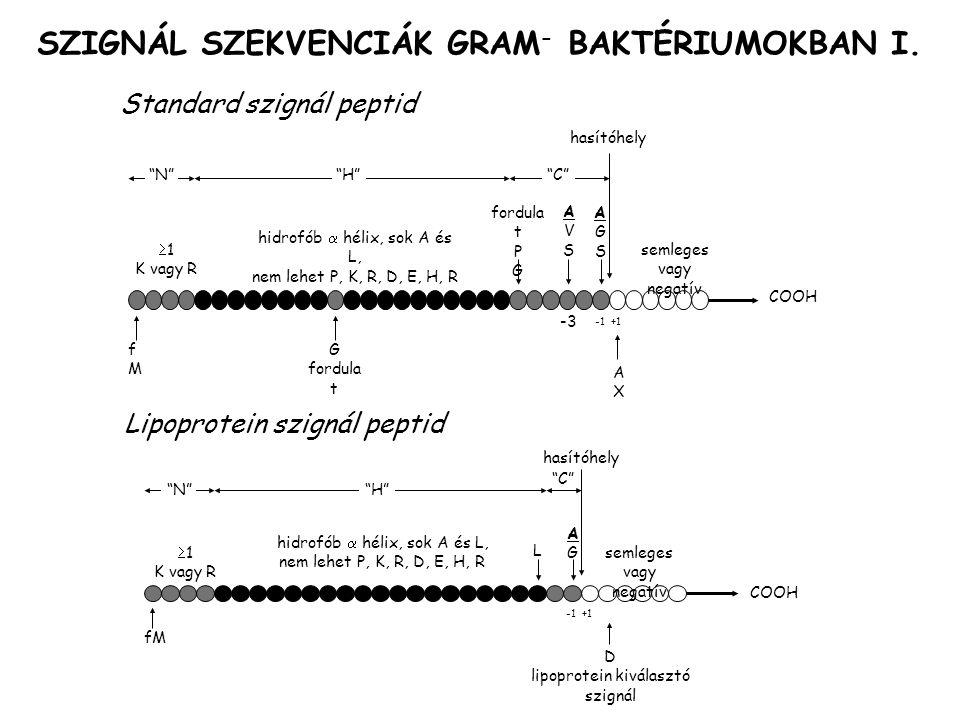 SZIGNÁL SZEKVENCIÁK GRAM - BAKTÉRIUMOKBAN I.