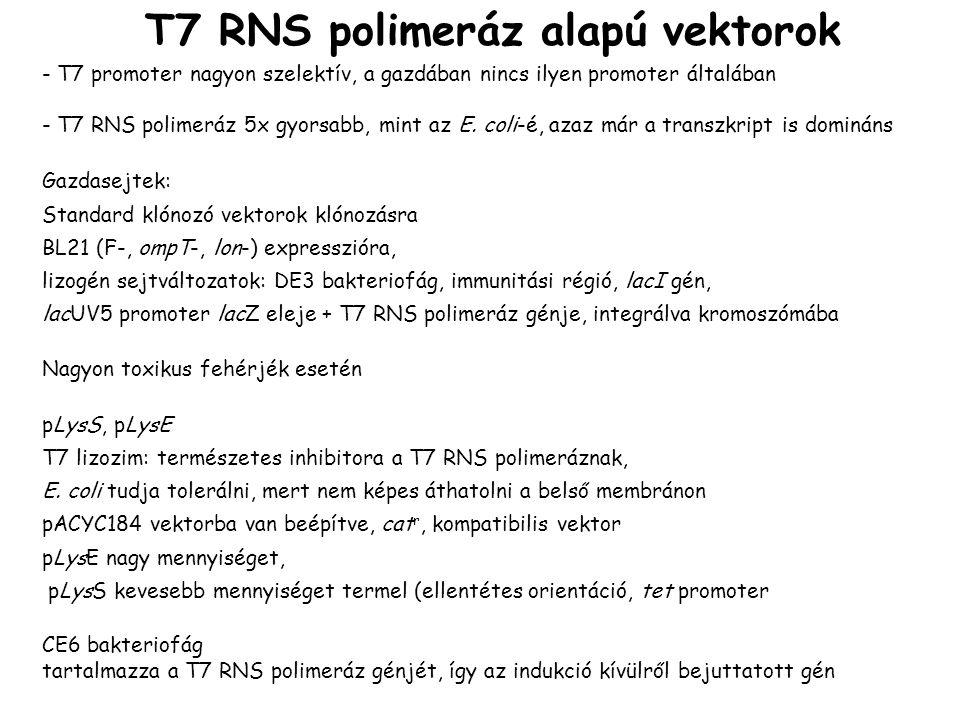 T7 RNS polimeráz alapú vektorok - T7 promoter nagyon szelektív, a gazdában nincs ilyen promoter általában - T7 RNS polimeráz 5x gyorsabb, mint az E.