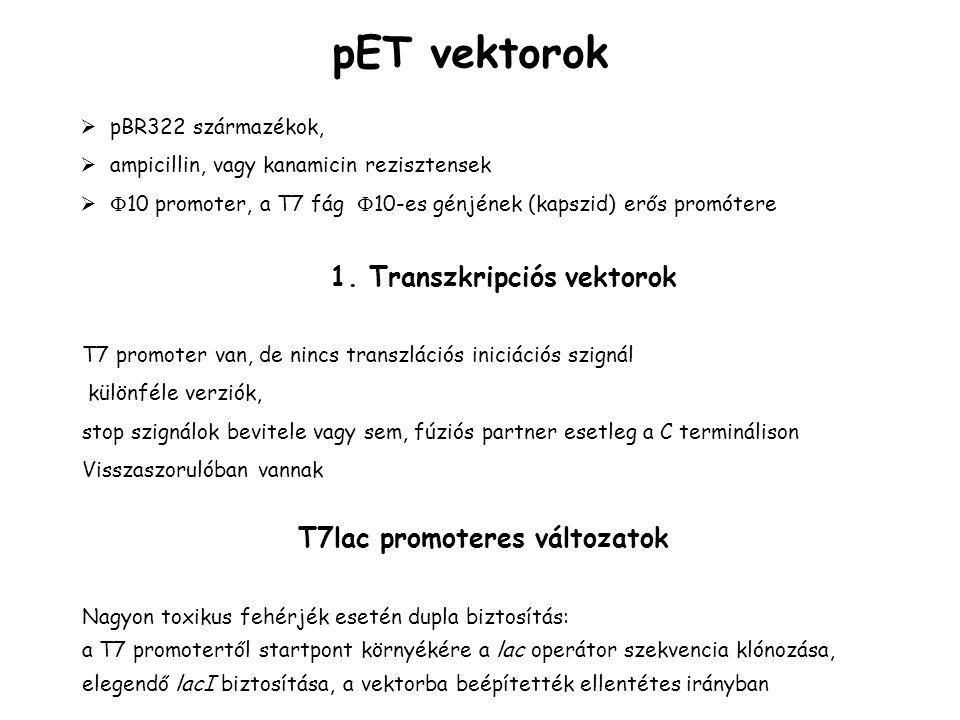 pET vektorok  pBR322 származékok,  ampicillin, vagy kanamicin rezisztensek   10 promoter, a T7 fág  10-es génjének (kapszid) erős promótere T7 promoter van, de nincs transzlációs iniciációs szignál különféle verziók, stop szignálok bevitele vagy sem, fúziós partner esetleg a C terminálison Visszaszorulóban vannak 1.