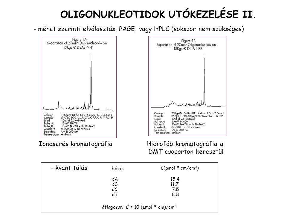 - méret szerinti elválasztás, PAGE, vagy HPLC (sokszor nem szükséges) OLIGONUKLEOTIDOK UTÓKEZELÉSE II.