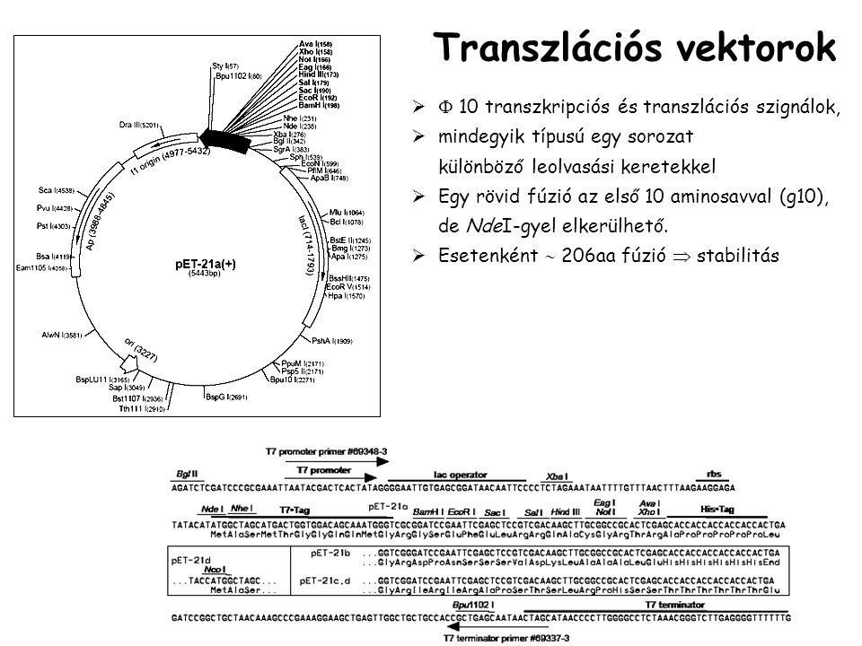   10 transzkripciós és transzlációs szignálok,  mindegyik típusú egy sorozat különböző leolvasási keretekkel  Egy rövid fúzió az első 10 aminosavval (g10), de NdeI-gyel elkerülhető.