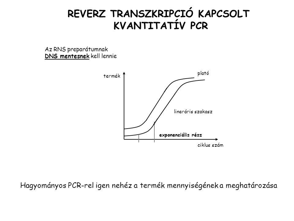 REVERZ TRANSZKRIPCIÓ KAPCSOLT KVANTITATÍV PCR Az RNS preparátumnak DNS mentesnek kell lennie exponenciális rész lineráris szakasz plató ciklus szám termék Hagyományos PCR-rel igen nehéz a termék mennyiségének a meghatározása