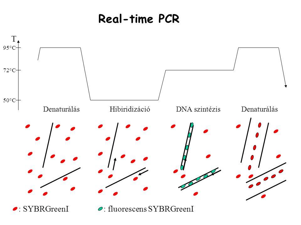 T 50°C 95°C 72°C DenaturálásHibiridizációDNA szintézis Real-time PCR Denaturálás : SYBRGreenI: fluorescens SYBRGreenI