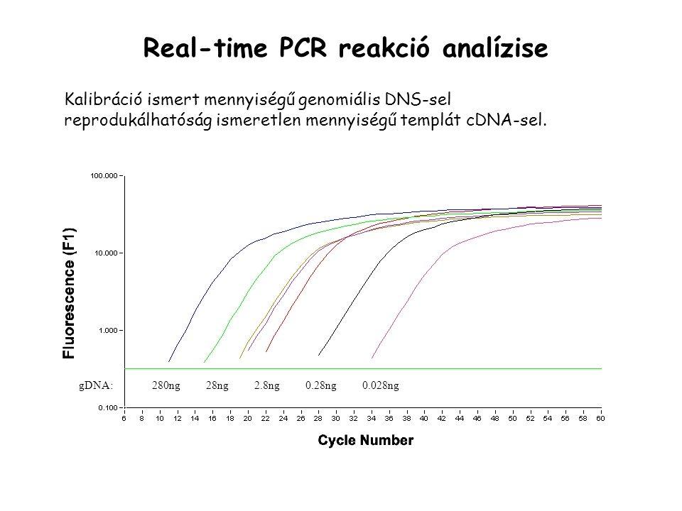 Real-time PCR reakció analízise 280ng28ng2.8ng0.28ng0.028nggDNA: Kalibráció ismert mennyiségű genomiális DNS-sel reprodukálhatóság ismeretlen mennyiségű templát cDNA-sel.