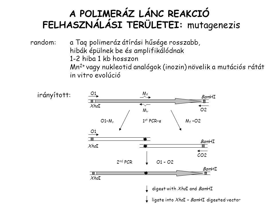 A POLIMERÁZ LÁNC REAKCIÓ FELHASZNÁLÁSI TERÜLETEI: mutagenezis random: a Taq polimeráz átírási hűsége rosszabb, hibák épülnek be és amplifikálódnak 1-2 hiba 1 kb hosszon Mn 2+ vagy nukleotid analógok (inozin) növelik a mutációs rátát in vitro evolúció irányított: XhoI MrMr MfMf O1 O2 O1-M r M f –O21 st PCR-s BamHI CO2 O1 XhoI BamHI 2 nd PCRO1 – O2 digest with XhoI and BamHI ligate into XhoI – BamHI digested vector