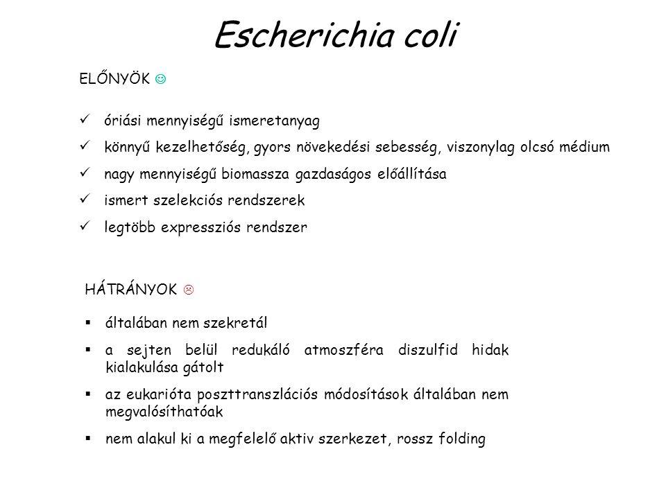 Escherichia coli HÁTRÁNYOK   általában nem szekretál  a sejten belül redukáló atmoszféra diszulfid hidak kialakulása gátolt  az eukarióta poszttranszlációs módosítások általában nem megvalósíthatóak  nem alakul ki a megfelelő aktiv szerkezet, rossz folding ELŐNYÖK óriási mennyiségű ismeretanyag könnyű kezelhetőség, gyors növekedési sebesség, viszonylag olcsó médium nagy mennyiségű biomassza gazdaságos előállítása ismert szelekciós rendszerek legtöbb expressziós rendszer