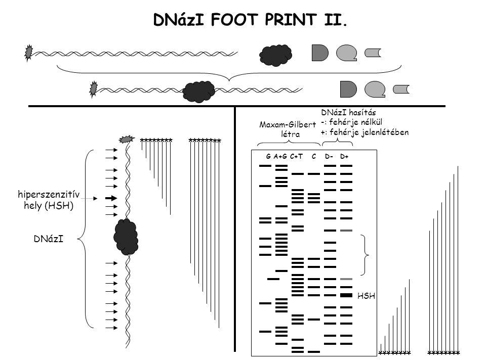 DNázI FOOT PRINT II.