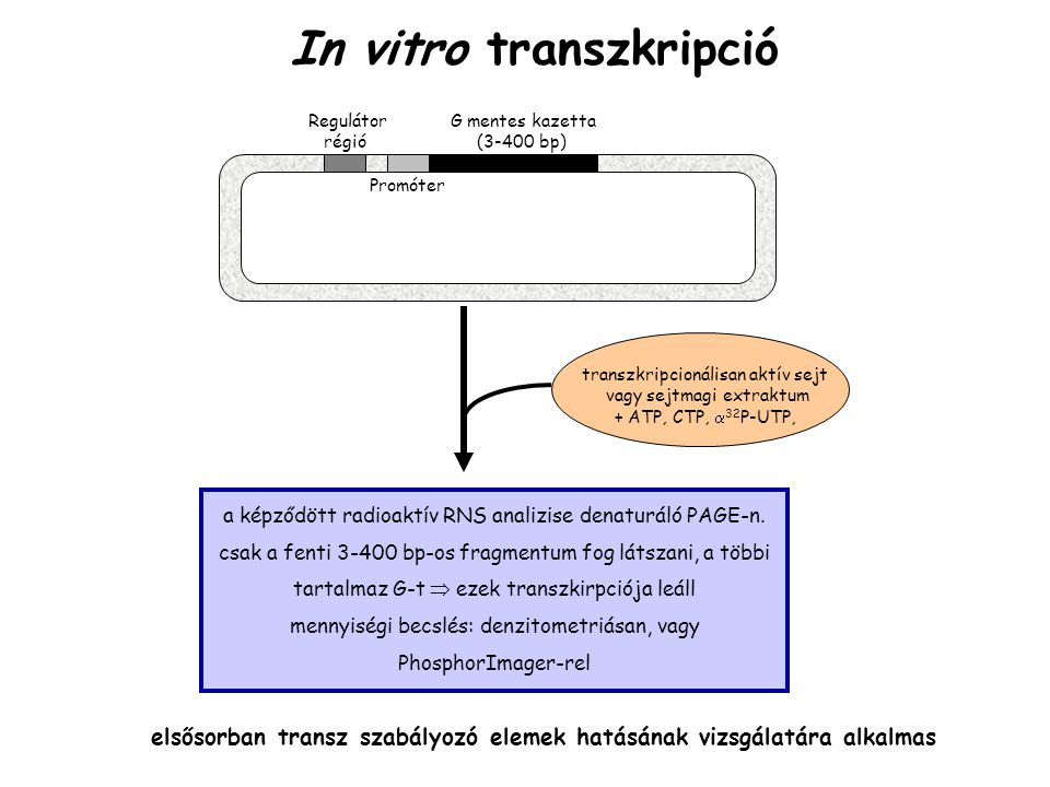 In vitro transzkripció Regulátor G mentes kazetta régió (3-400 bp) transzkripcionálisan aktív sejt vagy sejtmagi extraktum + ATP, CTP,  32 P-UTP, a képződött radioaktív RNS analizise denaturáló PAGE-n.