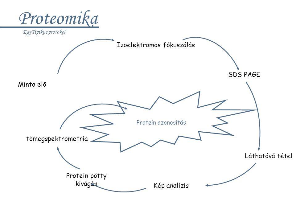 A degradoszóma komponensei I.