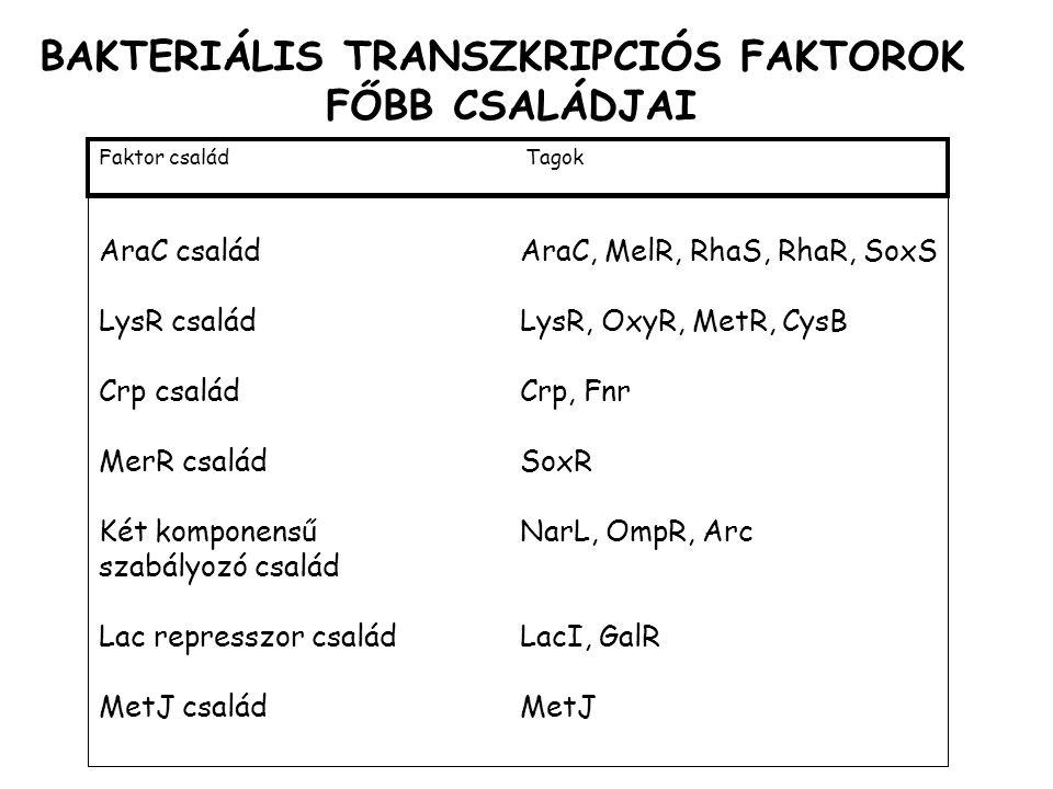 BAKTERIÁLIS TRANSZKRIPCIÓS FAKTOROK FŐBB CSALÁDJAI AraC családAraC, MelR, RhaS, RhaR, SoxS LysR családLysR, OxyR, MetR, CysB Crp családCrp, Fnr MerR családSoxR Két komponensűNarL, OmpR, Arc szabályozó család Lac represszor családLacI, GalR MetJ családMetJ Faktor család Tagok
