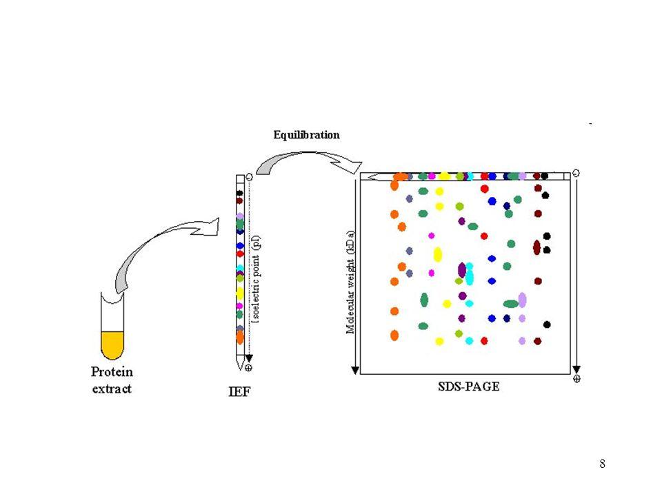 Oldhatatlan iclusion bodies trpEII, vagy cII, nincs proteolízis, differenciális centrifugálással az inclusion body könnyen tisztítható, probléma: nem aktív fehérje pl sometostatin, inzulin A, B, ellenanyag termelés Oldható forma biológiailag aktív fehérje, affinitás oszlopon való tisztítás problémák a stabilitással, kevésbé jósolható Fúziós fehérjék oldhatósága