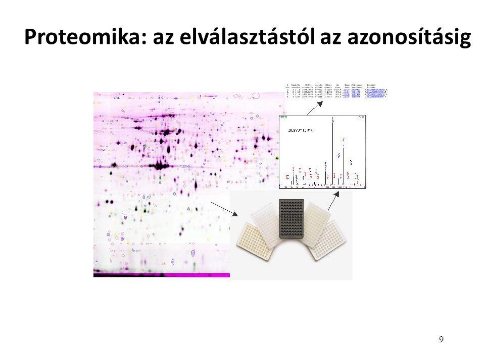 9 Proteomika: az elválasztástól az azonosításig