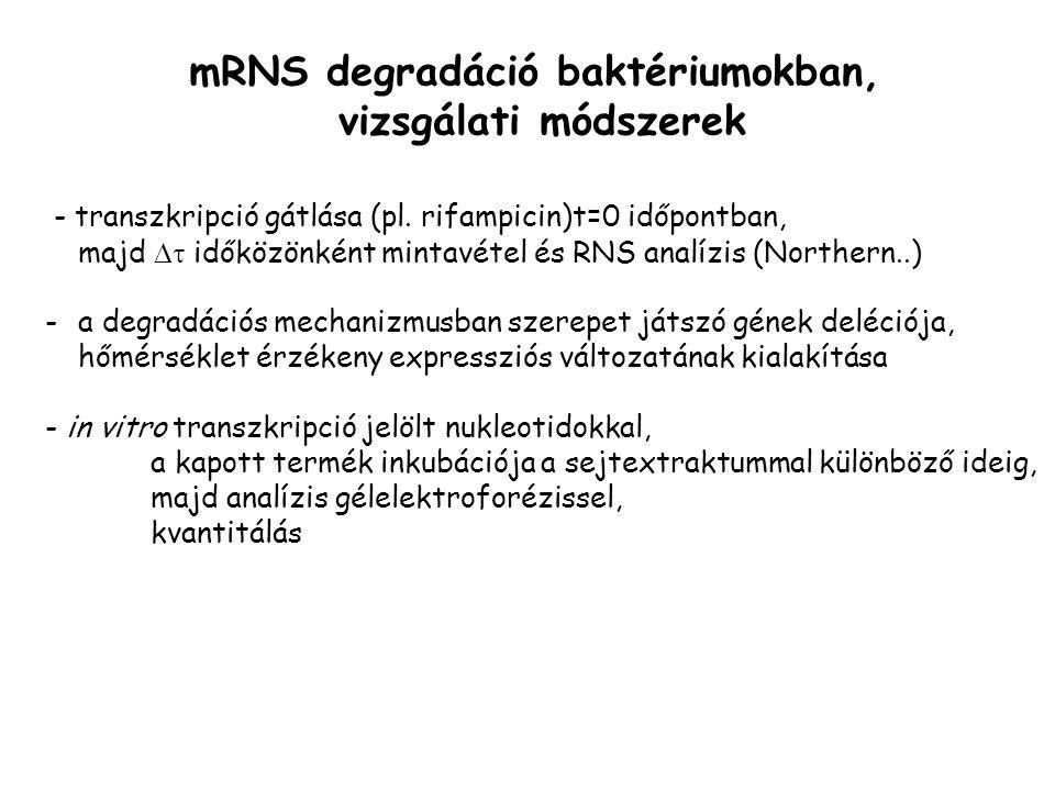 - transzkripció gátlása (pl.