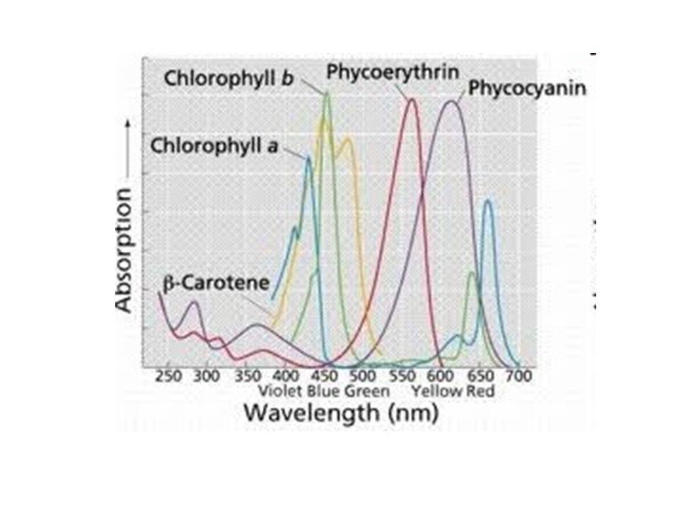Molekulaszínképek szerkezete a molekulák színképe az őket alkotó atomok színképeinek összege a molekuláknak emellett kvantált forgási és rezgési átmenetei is vannak (az atomoknak ilyen nincsen!) ezek rárakódnak az elektronátmenetekre az egyes vonalak nem megkülönböztethetőek csak a burkológörbét tudjuk megfigyelni a molekulaszínképek sávosak FWHH 100-150 nm