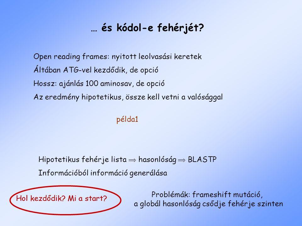 Hol kezdődik? Mi a start? … és kódol-e fehérjét? Open reading frames: nyitott leolvasási keretek Áltában ATG-vel kezdődik, de opció Hossz: ajánlás 100