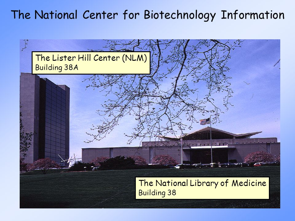 The National Center for Biotechnology Information The Lister Hill Center (NLM) Building 38A The National Library of Medicine Building 38
