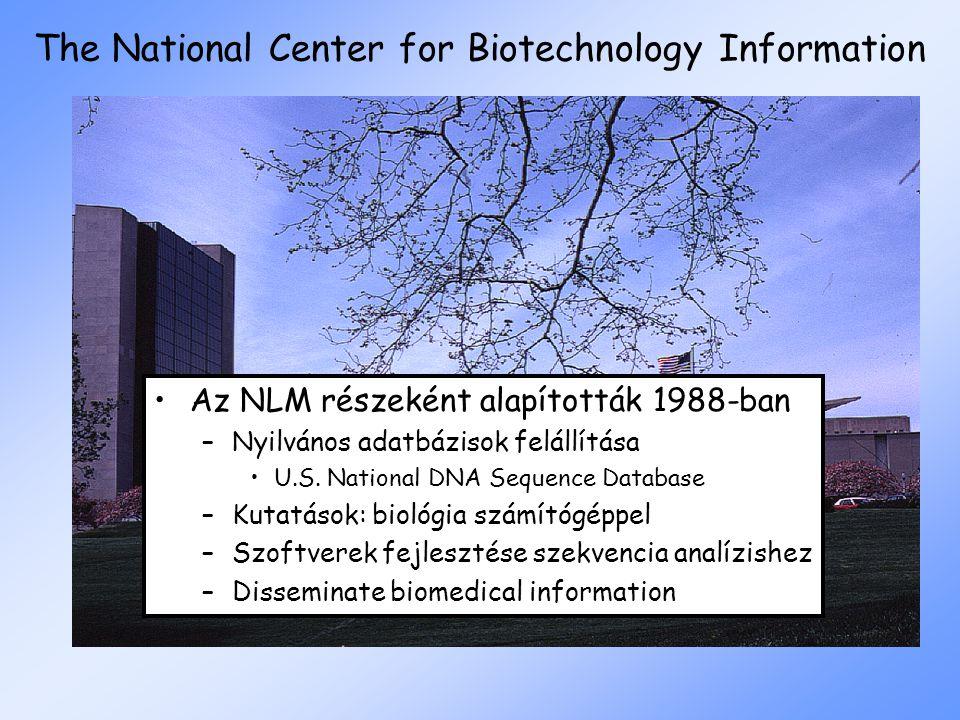 The National Center for Biotechnology Information Az NLM részeként alapították 1988-ban –Nyilvános adatbázisok felállítása U.S. National DNA Sequence