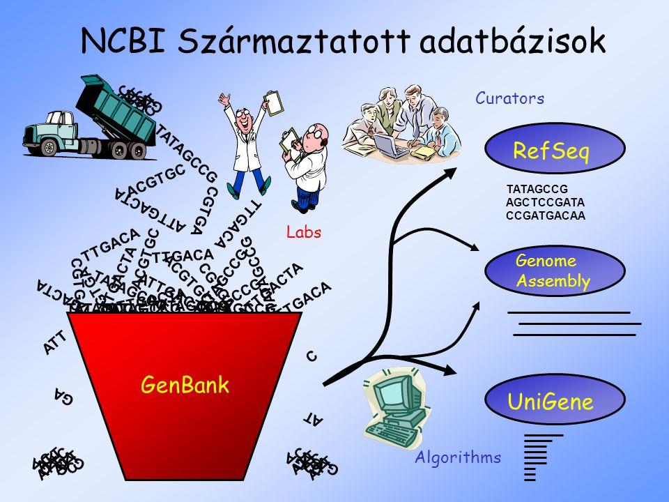 NCBI Származtatott adatbázisok ATTGACTA TTGACA CGTGA ATTGACTA TATAGCCG ACGTGC TTGACA CGTGA ATTGACTA TATAGCCG GenBank TATAGCCG AT GA C ATT GA ATT C C G