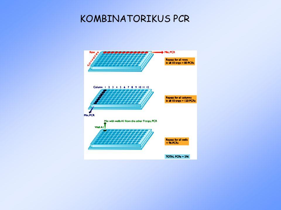 KOMBINATORIKUS PCR