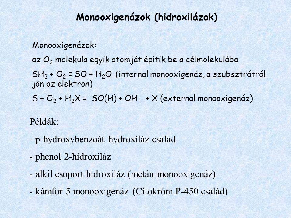 Monooxigenázok (hidroxilázok) Monooxigenázok: az O 2 molekula egyik atomját építik be a célmolekulába SH 2 + O 2 = SO + H 2 O (internal monooxigenáz, a szubsztrátról jön az elektron) S + O 2 + H 2 X = SO(H) + OH - _ + X (external monooxigenáz) Példák: - p-hydroxybenzoát hydroxiláz család - phenol 2-hidroxiláz - alkil csoport hidroxiláz (metán monooxigenáz) - kámfor 5 monooxigenáz (Citokróm P-450 család)