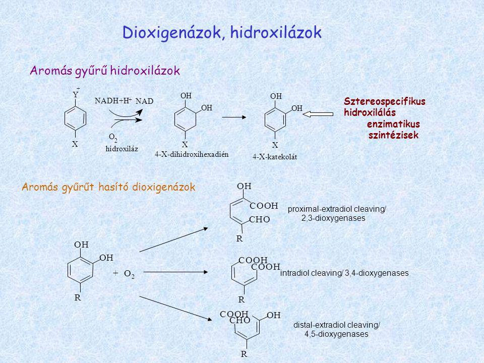 Dioxigenázok, hidroxilázok Y X 4-X-dihidroxihexadién O 2 NADH+H NAD + H OH O X + Sztereospecifikus hidroxilálás enzimatikus szintézisek hidroxiláz 4-X-katekolát H OH O X Aromás gyűrű hidroxilázok Aromás gyűrűt hasító dioxigenázok R OH OH +O 2 COOH COOH R intradiol cleaving/ 3,4-dioxygenases CHO R OH COOH proximal-extradiol cleaving/ 2,3-dioxygenases COOH CHO OH R distal-extradiol cleaving/ 4,5-dioxygenases