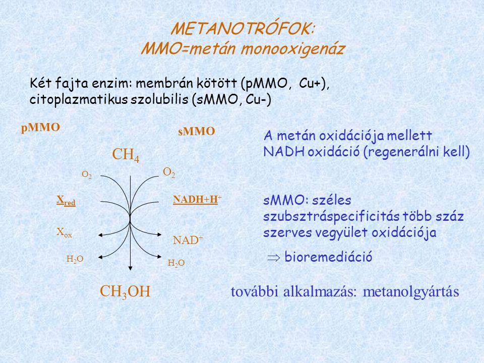 METANOTRÓFOK: MMO=metán monooxigenáz CH 4 NADH+H + O2O2 H2OH2O NAD + O2O2 H2OH2O X ox X red sMMO pMMO CH 3 OH Két fajta enzim: membrán kötött (pMMO, Cu+), citoplazmatikus szolubilis (sMMO, Cu-) A metán oxidációja mellett NADH oxidáció (regenerálni kell) sMMO: széles szubsztráspecificitás több száz szerves vegyület oxidációja  bioremediáció további alkalmazás: metanolgyártás