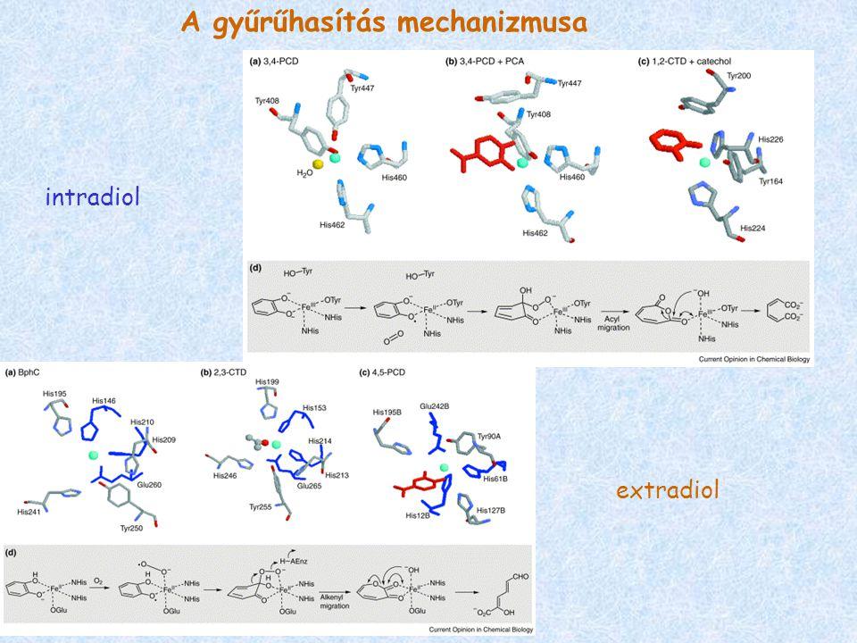 intradiol extradiol A gyűrűhasítás mechanizmusa