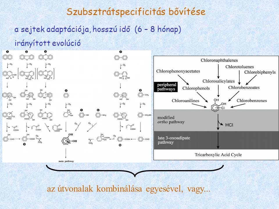 Szubsztrátspecificitás bővítése a sejtek adaptációja, hosszú idő (6 – 8 hónap) irányított evolúció az útvonalak kombinálása egyesével, vagy...