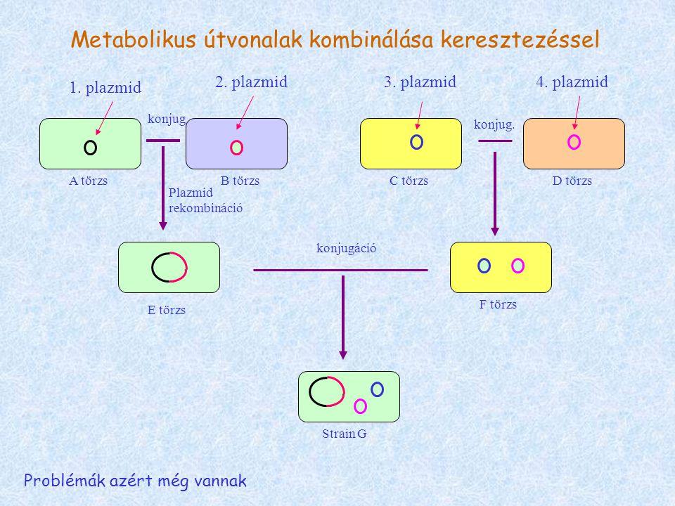 Metabolikus útvonalak kombinálása keresztezéssel 1.