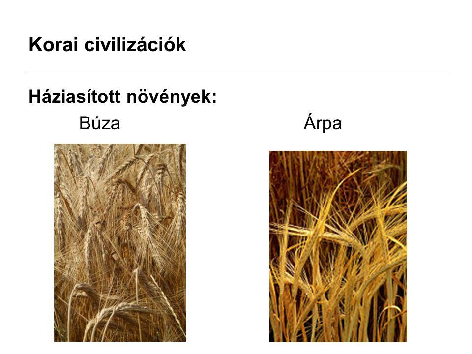 Korai civilizációk Háziasított növények: Búza Árpa