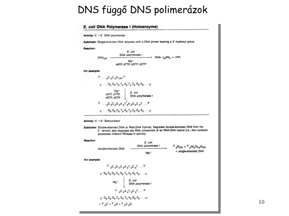 10 DNS függő DNS polimerázok