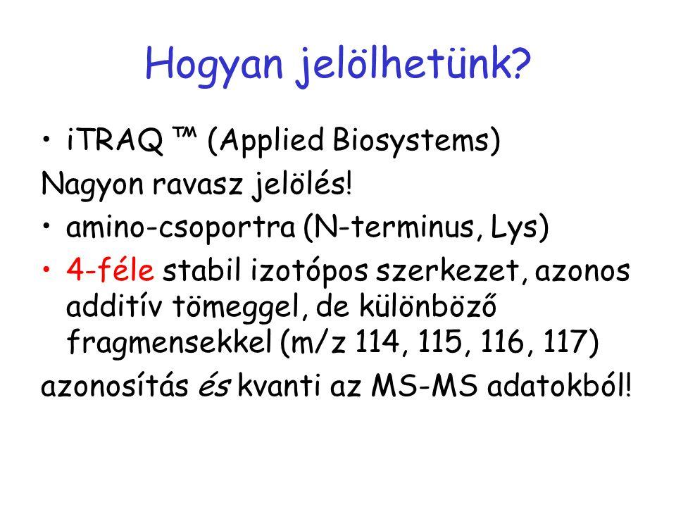 iTRAQ jelölés  4 mintát kvantitatíve megkülönböztetni.