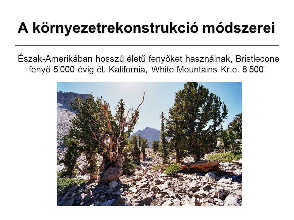A környezetrekonstrukció módszerei Észak-Amerikában hosszú életű fenyőket használnak, Bristlecone fenyő 5'000 évig él. Kalifornia, White Mountains Kr.