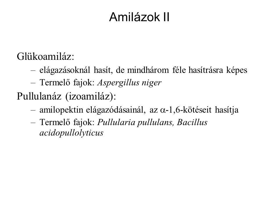 Glükoamiláz: –elágazásoknál hasít, de mindhárom féle hasítrásra képes –Termelő fajok: Aspergillus niger Pullulanáz (izoamiláz): –amilopektin elágazódá