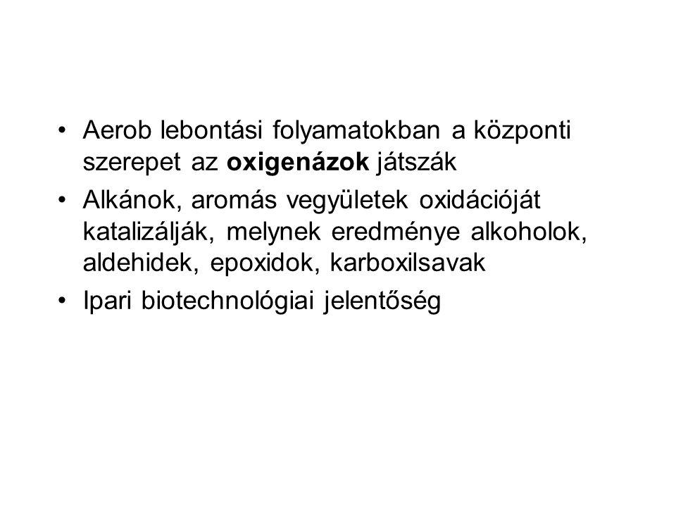 Aerob lebontási folyamatokban a központi szerepet az oxigenázok játszák Alkánok, aromás vegyületek oxidációját katalizálják, melynek eredménye alkohol