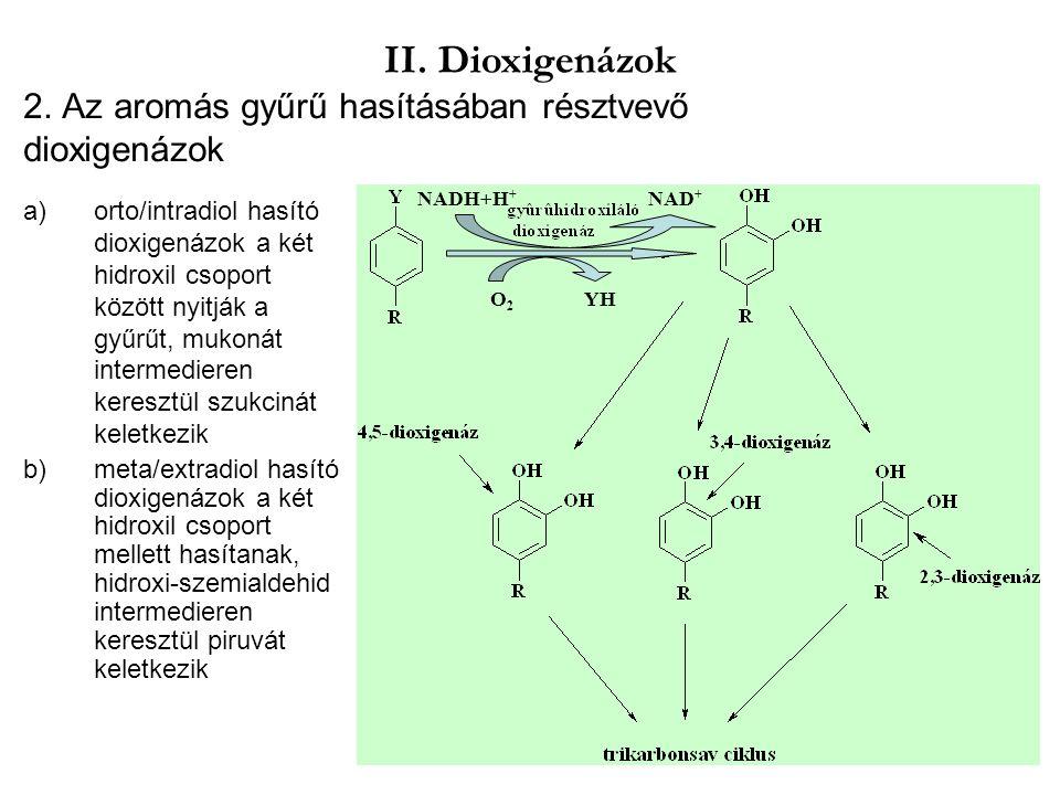2. Az aromás gyűrű hasításában résztvevő dioxigenázok a)orto/intradiol hasító dioxigenázok a két hidroxil csoport között nyitják a gyűrűt, mukonát int