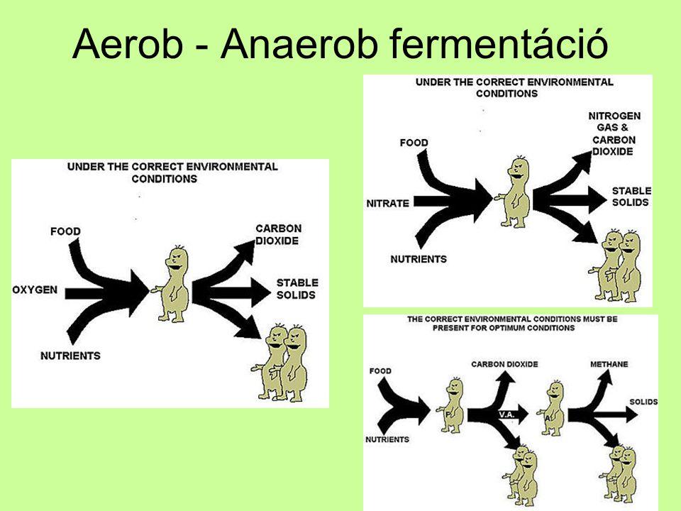 Aerob - Anaerob fermentáció