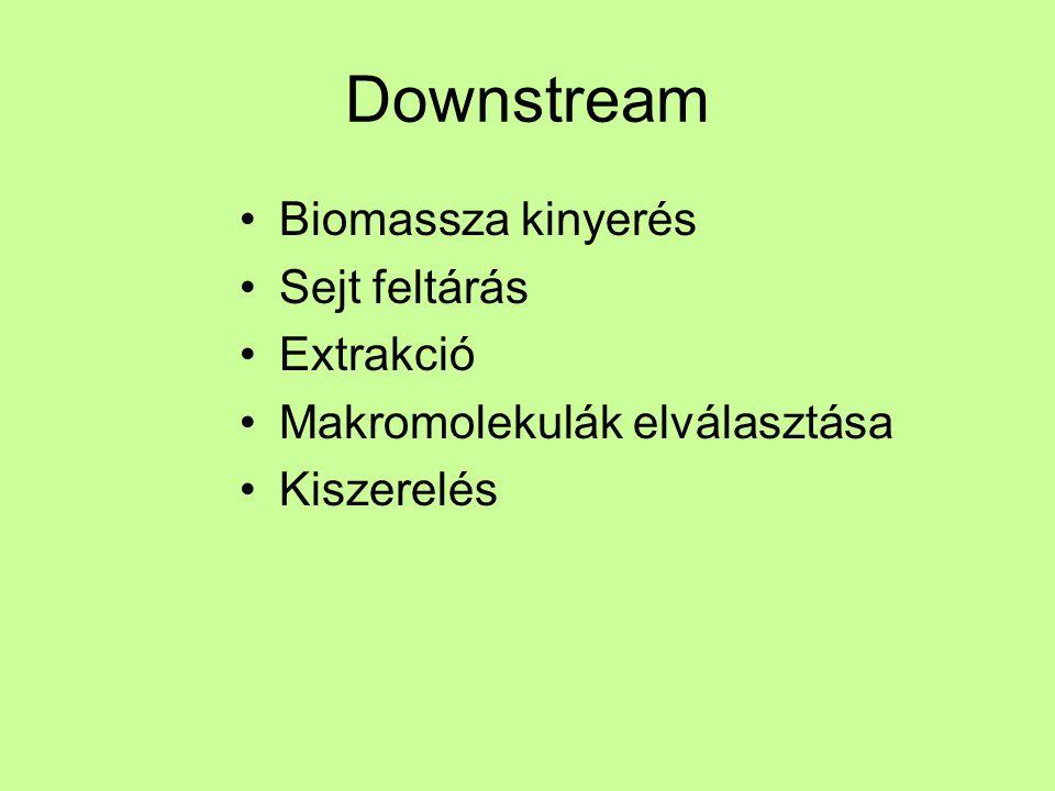 Downstream Biomassza kinyerés Sejt feltárás Extrakció Makromolekulák elválasztása Kiszerelés