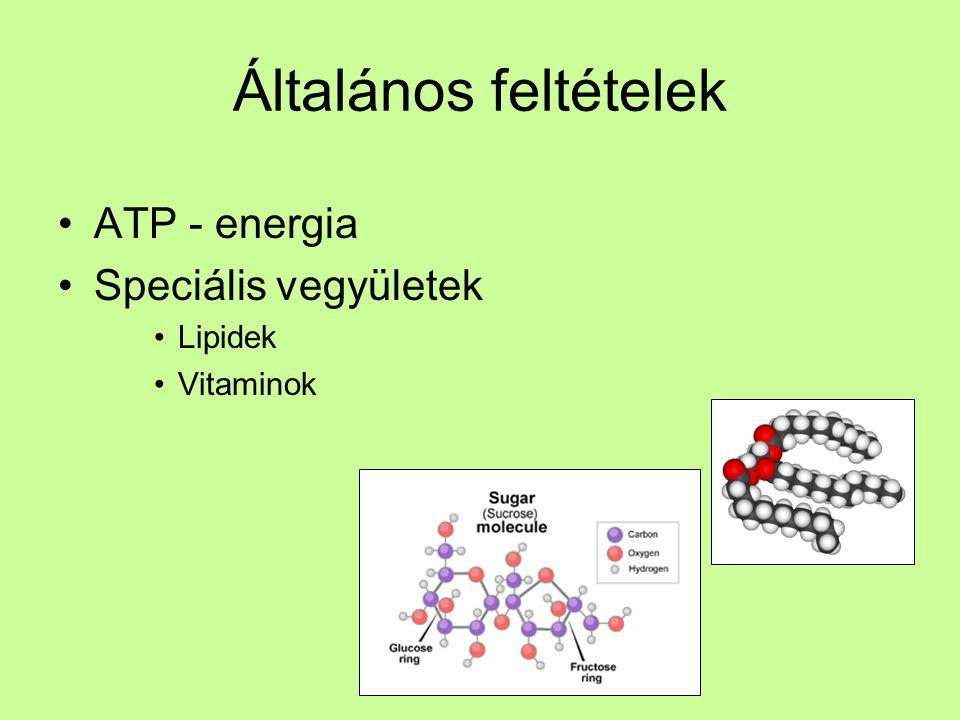 Általános feltételek ATP - energia Speciális vegyületek Lipidek Vitaminok