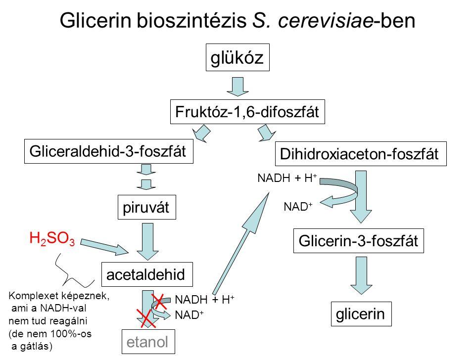Glicerin bioszintézis S. cerevisiae-ben glükóz piruvát acetaldehid etanol NADH + H + NAD + H 2 SO 3 Fruktóz-1,6-difoszfát Gliceraldehid-3-foszfát Dihi
