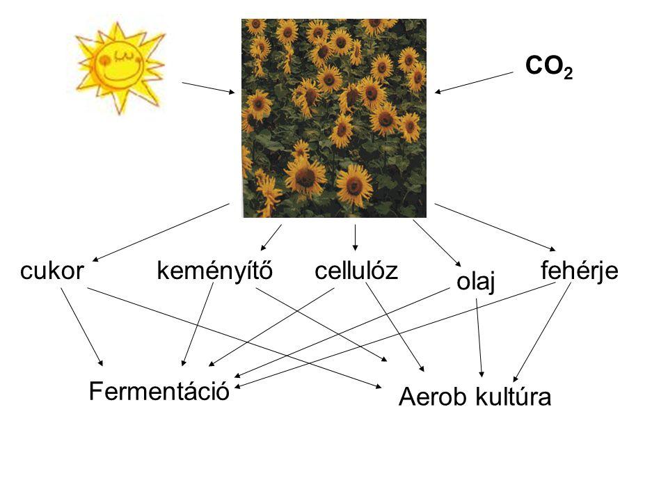 CO 2 cukorkeményítőcellulóz olaj Fermentáció Aerob kultúra fehérje